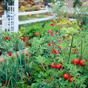 Cách làm vườn rau tại nhà xanh mướt đẹp mắt