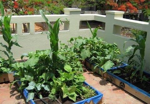 Cách làm vườn trên sân thượng khoa học nhất