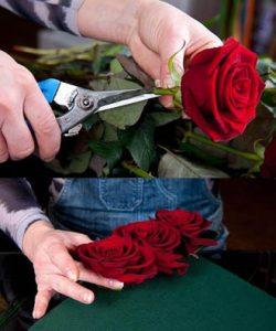 Cách cắm hoa hồng đẹp và đơn giản ngày tết